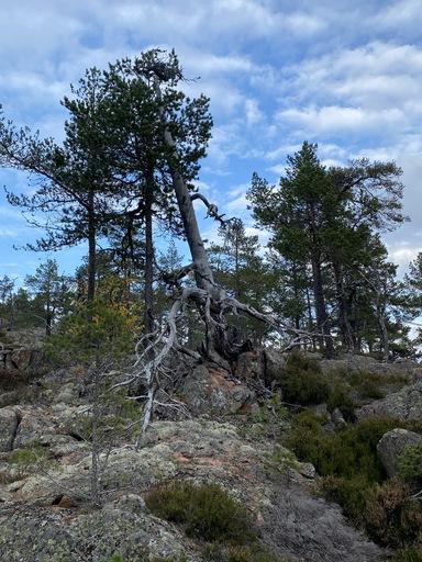 Coachingsreis Zweden Skuleskogen national park